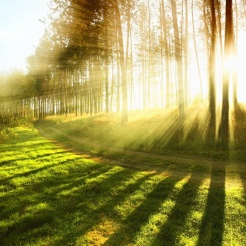 in-the-summer-forest-sunlight-bright-rays_1024x768